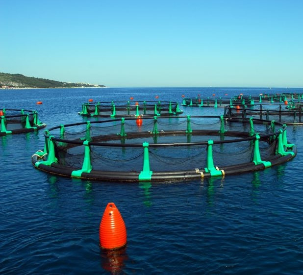 it fish-farm-fonda-floating-nets home
